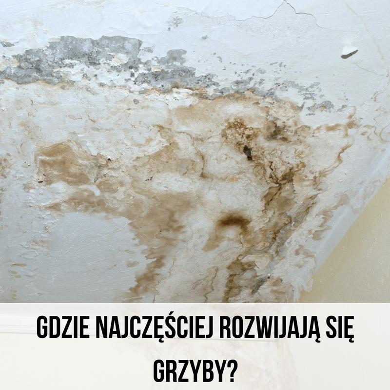 grzyb_na_scianie.jpg